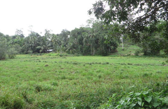 Paddy field view property for sale