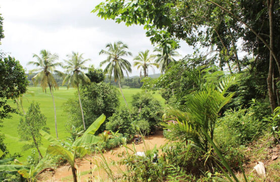 Land for sale with paddy field view