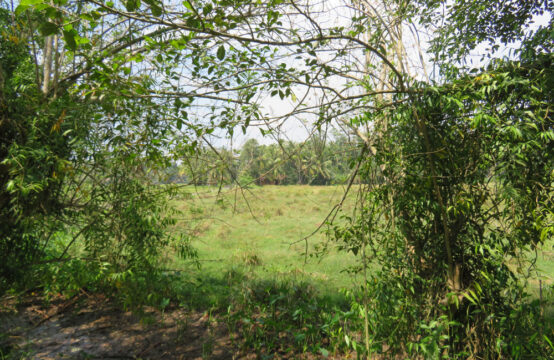 Development land with paddy filed view