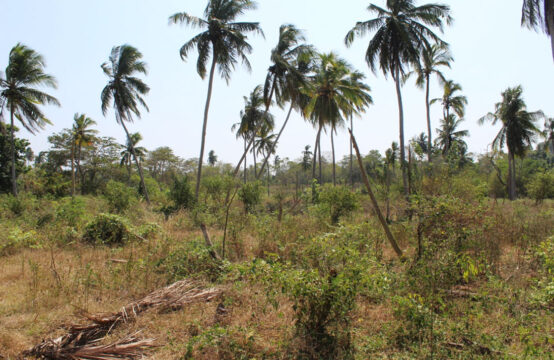 Paddy field view property for sale 4.9 Acre