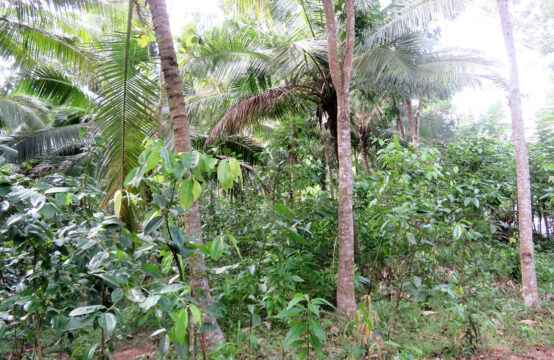 Land for sale near Midigama surf point