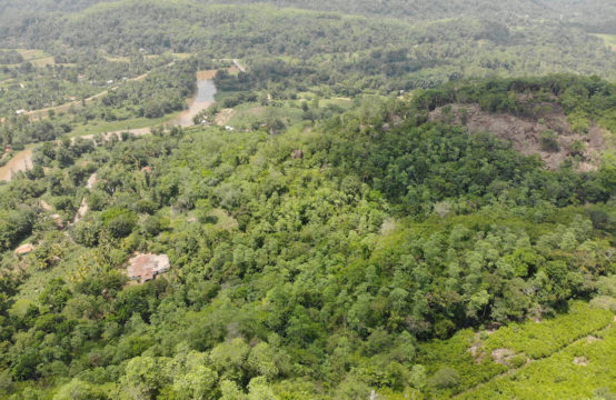 Spectacular cinnamon plantation for sale – 38 Acres