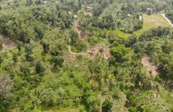 12 Acre mixed plantation for development