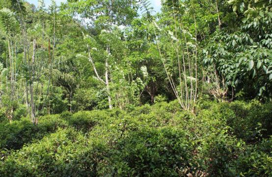 Land for sale at Baddegama – 5.5 Acres