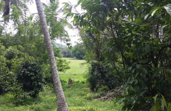 Sri Lankan house for sale in Dikwella 2.5 Acres
