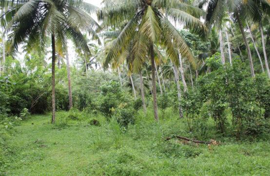 Land for sale in Udagangoda – 3 Acres