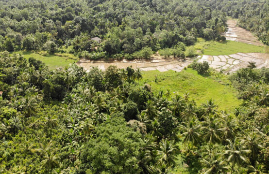 4.5 Acre Cinnamon land for sale in Radampala