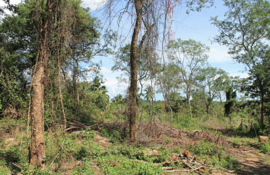 Land for sale in Beliatta 4 Acre