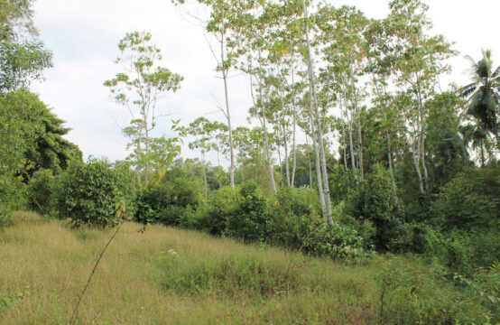 Land for sale in Gonagala 1 Acre