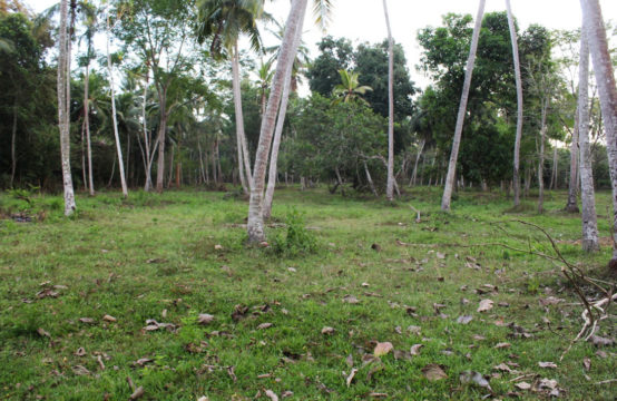 5 Acre Coconut land for sale in Tangalle