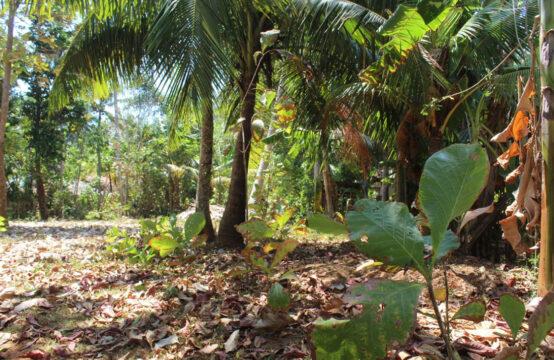 Small plot of land for sale in Kottagoda