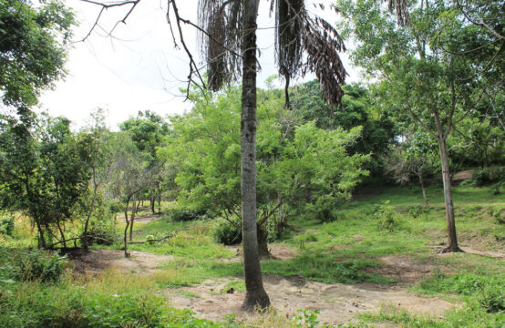 Land for sale on Koggala lake 2.5 Acres