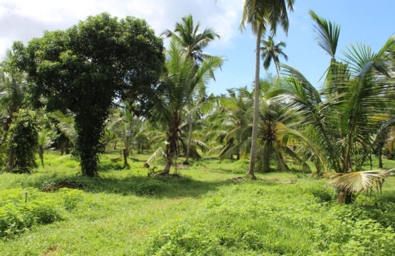 Coconut plantation for sale (34 Acres)