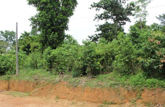 Small Cinnamon plantation for sale
